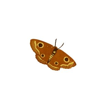 Moth1[1]